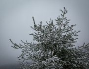 morning snows, clouds, Karme Choling Vermont