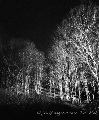 night view, woods on the land, Karme Choling Vermont