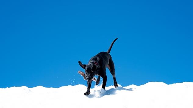 happydog.5.31 (1)